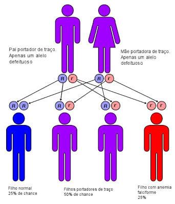 Anemia falciforme -  Legenda: r = gene defeituoso; R = gene normal. Pessoa Vermelha = anemia falciforme; Pessoa Roxa = traço falciforme; Pessoa Azul = normal.