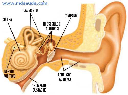 Dolor de oído vértigo de la cabeza