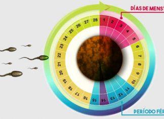 Quedar Embarazada Durante La Menstruación