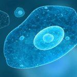 AMEBA (Entamoeba histolytica) – Síntomas y Tratamiento