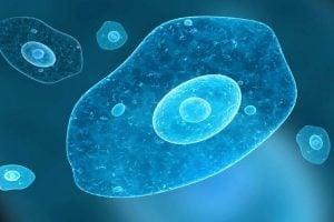 Amebíase – Infecção provocada pela ameba Entamoeba histolytica