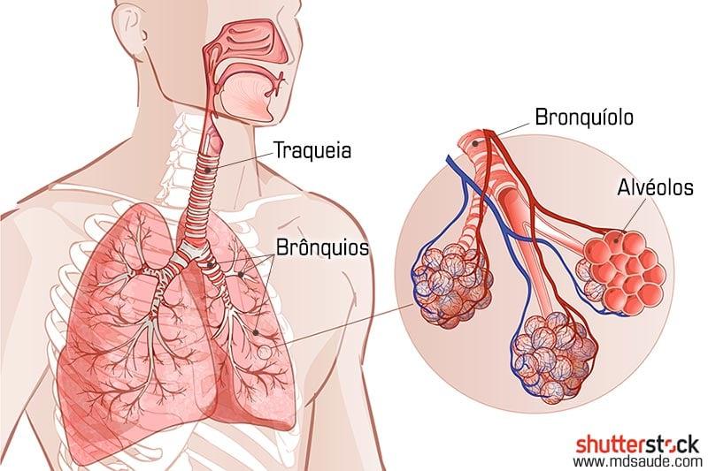 Anatomia das vias respiratórias