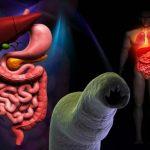 ANCILOSTOMOSE – Transmissão, Sintomas e Tratamento