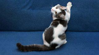 Doença da arranhadura do gato