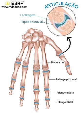 Articulações da mão