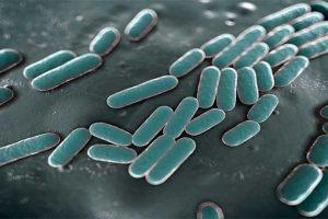 Cancro mole – DST causada pela bactéria Haemophilus ducreyi