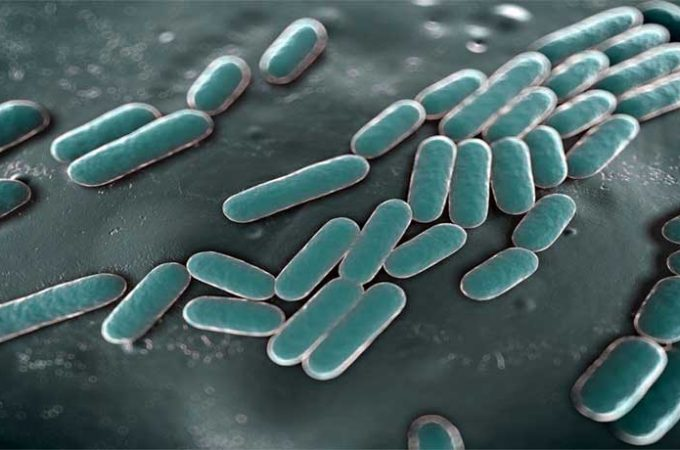 Bactéria cancroide