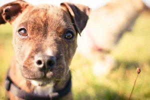 Mordida de cachorro – Cuidados e tratamento