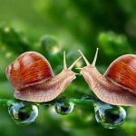 ESQUISTOSSOMOSE – Sintomas, Ciclo e Tratamento