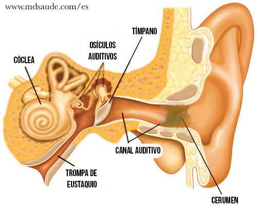 Cera de los oídos