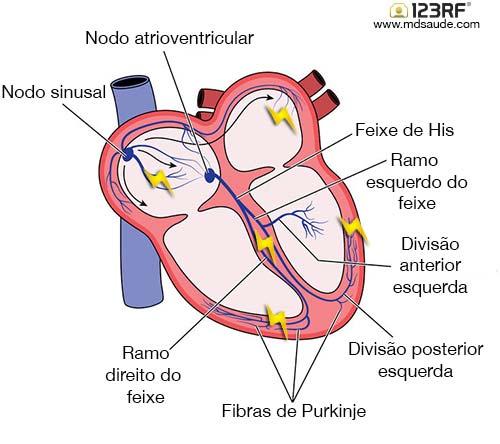 Condução dos impulsos elétricos cardíacos