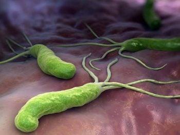 Diarreia pela bactéria Escherichia coli (E.coli)