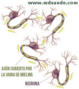 Impulsos eléctricos entre las neuronas