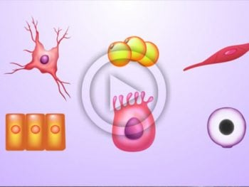 VÍDEO: Quantas células e bactérias existem no nosso corpo?
