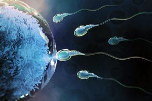 Periodo fértil para quedar embarazada