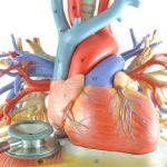 MIOCARDITE – Sintomas, Causas e Tratamento