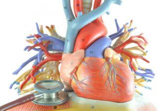 MIOCARDITE – Causas, sintomas e tratamento