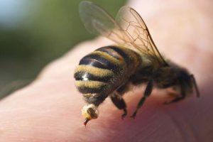 Como cuidar de picada de abelha ou vespa