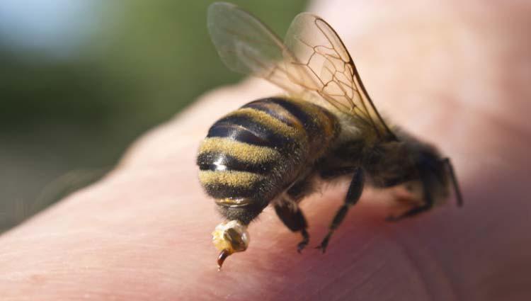Picada de abelha