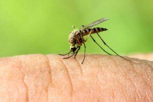 Como tratar as picadas de mosquito