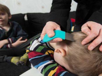 PIOLHO – Sintomas, Transmissão e Tratamento
