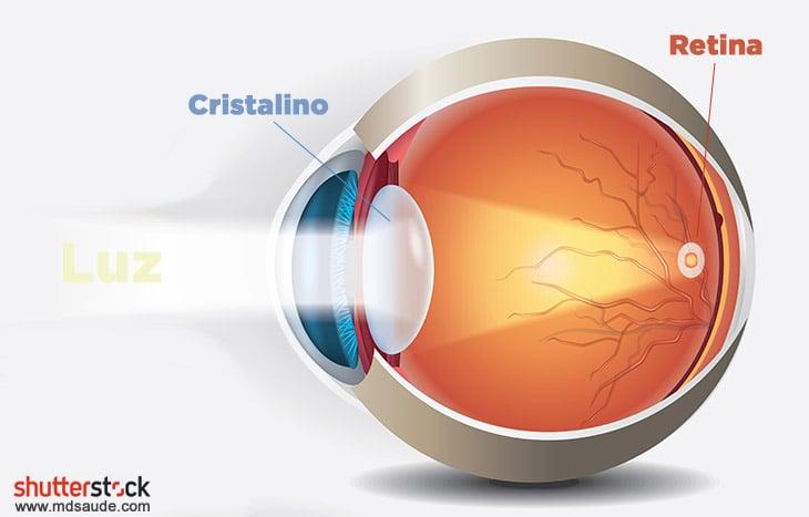 Cristalino focando a luz na retina