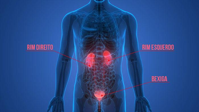 Localização anatômica dos rins