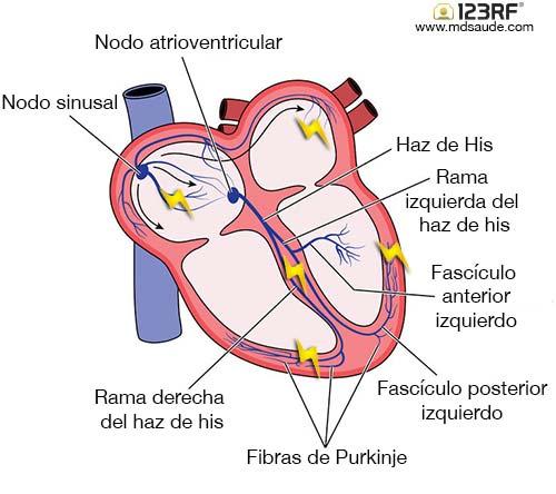 Como bajar las palpitaciones cardiacas