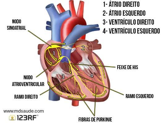 Sistema elétrico cardíaco