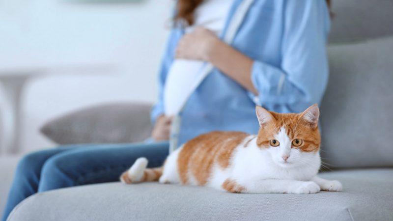 Toxoplasmosis durante el embarazo