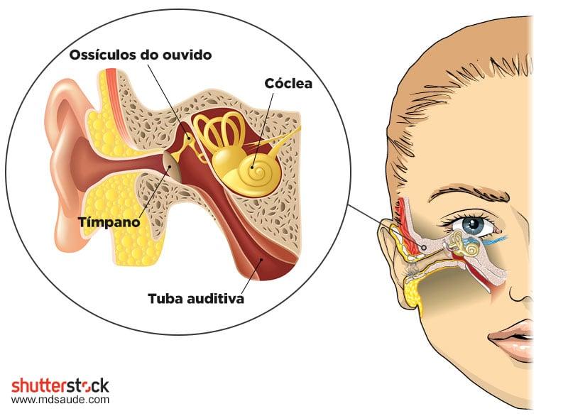 Ossículos do ouvido e tuba de Eustáquio